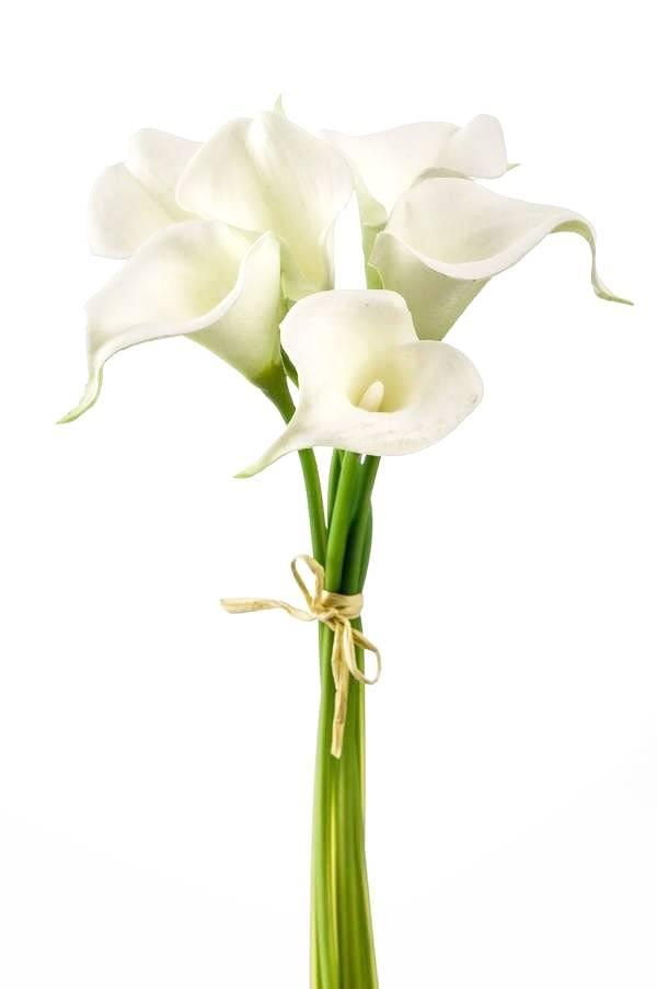 Цветы каллы с доставкой спб, 1000